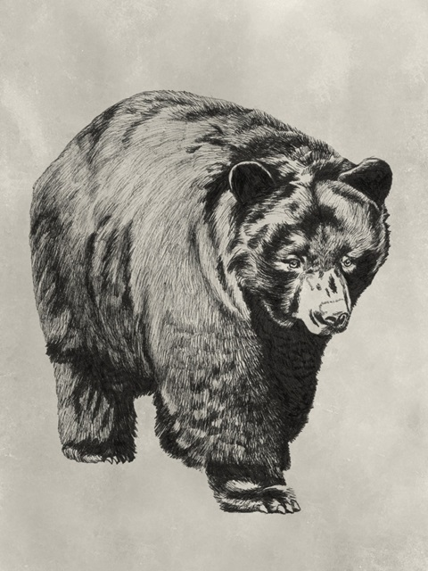 Pen and Ink Bear I